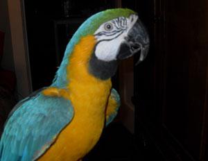 Birds Max