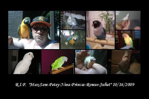 Birds - Rosado's