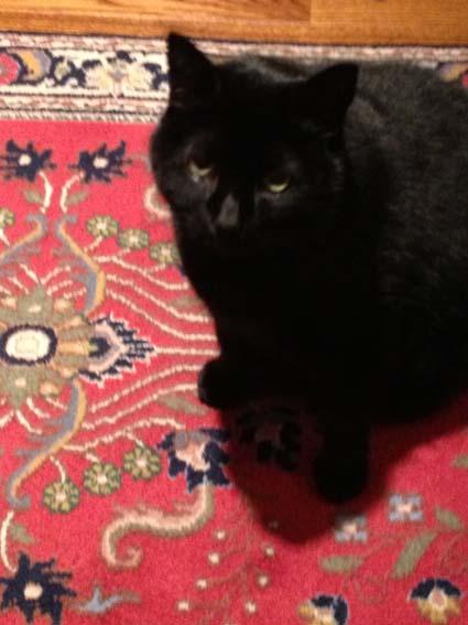 Cat: Ash Blatt - Black Cat
