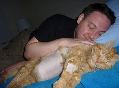 Cat_ JD & Ben - Orange Tabby cat