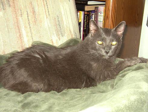 Cat: Katrina - Sacramento, CA