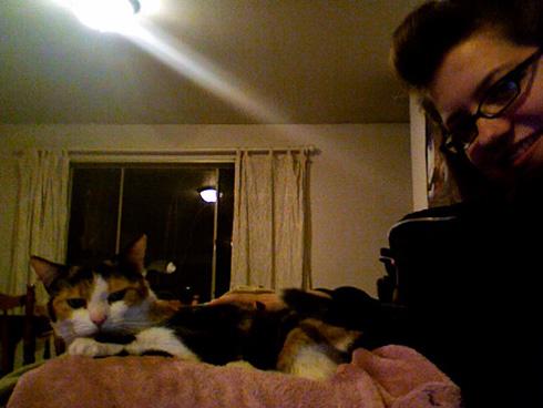 Cat: Peabo (Callico)