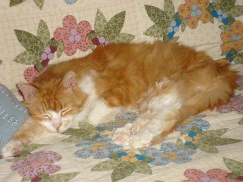 Cat: Rusty on quilt