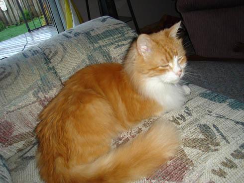 Cat: Rusty on sofa