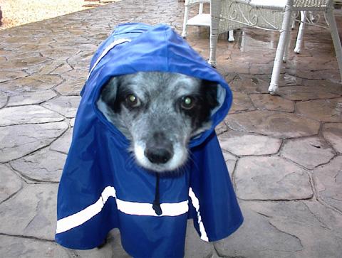 Chelsea - raincoat