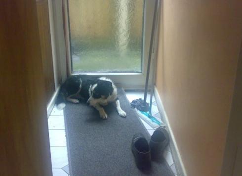 Dog Bridget - Border Collie - Liverpool
