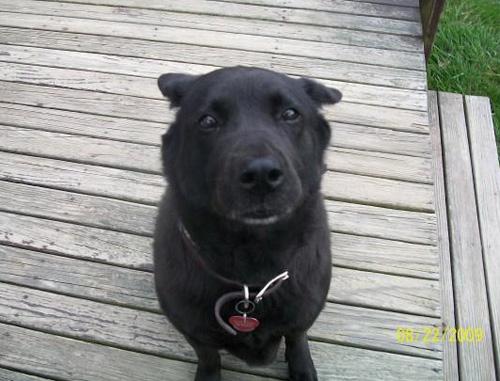 Dog - Callie