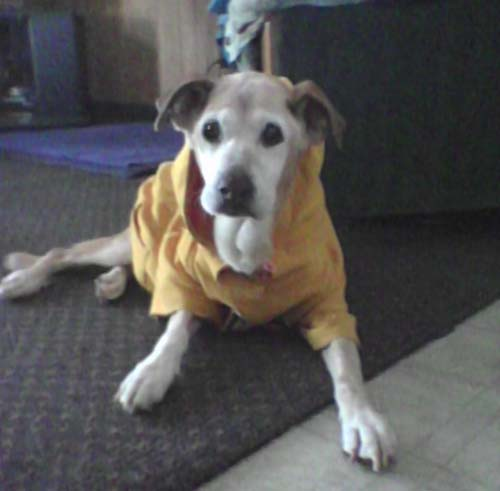 Dog: Jossy Labrador Mix