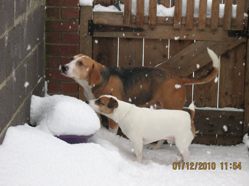 Dog: Lucy - Beagle & Max