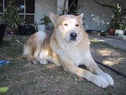 Dog Mogul - Sacramento CA