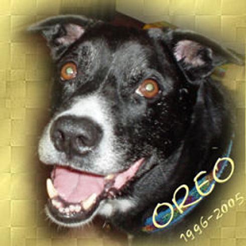 Dog - Oreo