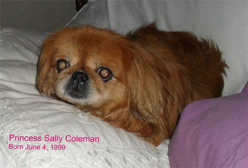 Pet Dog: Princess Sally - Pekingese