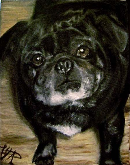 Pet Dog: Pugsley - Pug