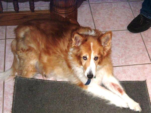Dog - Sasha
