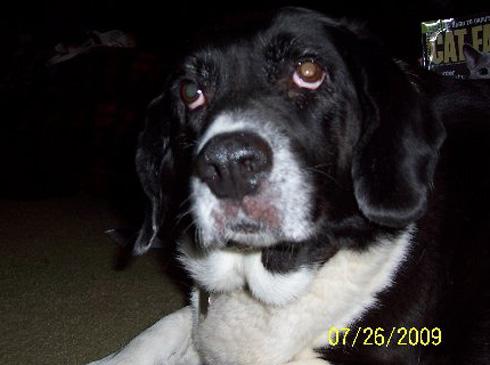 Dog - Snoopy
