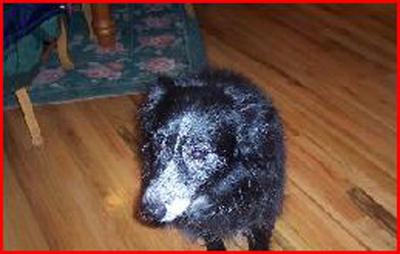 Dog - Tracy