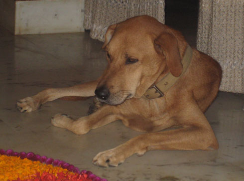 Dog Tuffey - Bangalore India