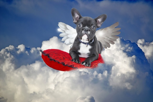 Amazing Pet heaven