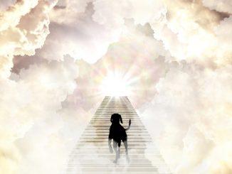 pet heaven