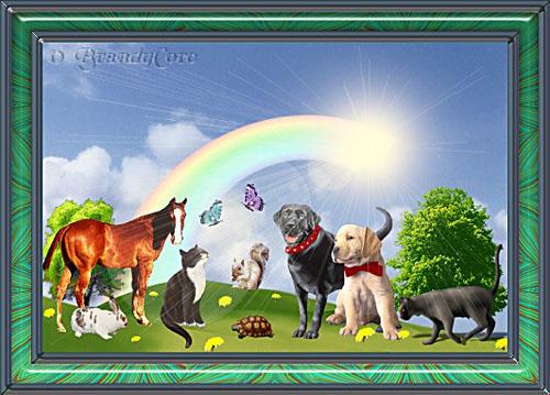 animal_heaven