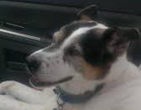 Aerial - Labador dog