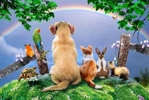 pet rainbow bridge