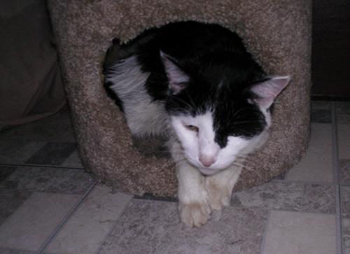 Chester Chalupa pet cat
