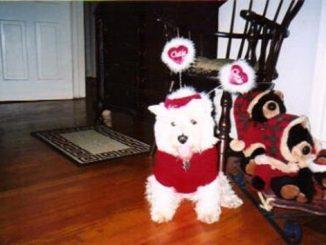 Dog: Tina - West Highland Terrier