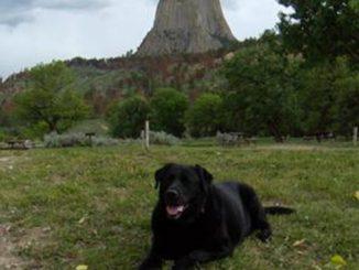 Pet dog - Dee Dee Diesel - Black Labrador