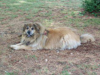 Dog Rolf