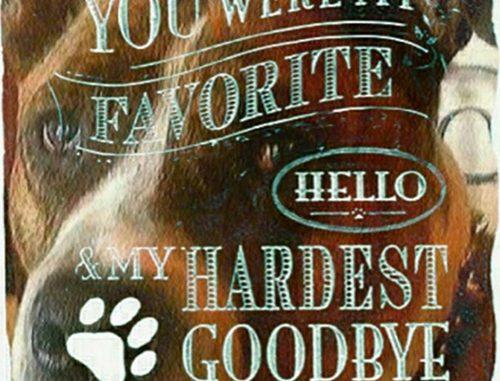 Dog: Brutus - Pit Bull / Boxer