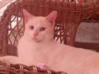 pet cat AJ