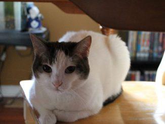 Cat - Cassandra