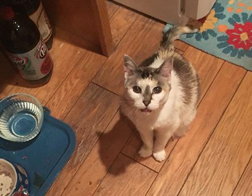 Cat: Gemma (Calico)