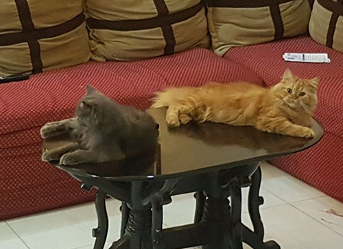 Cat - Snicker and Smokey
