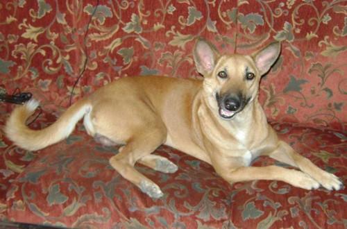 Pet dog memorial – Woolie – Indian Desi