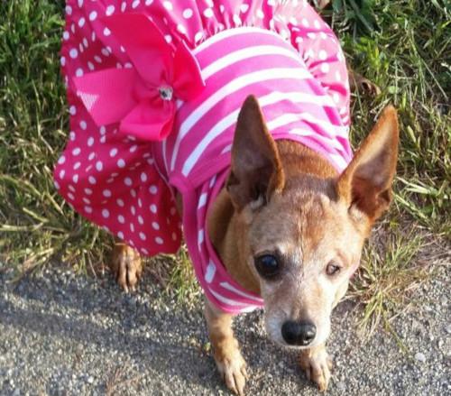 Pet dog – Zoey