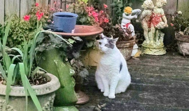 Pet cat Henry
