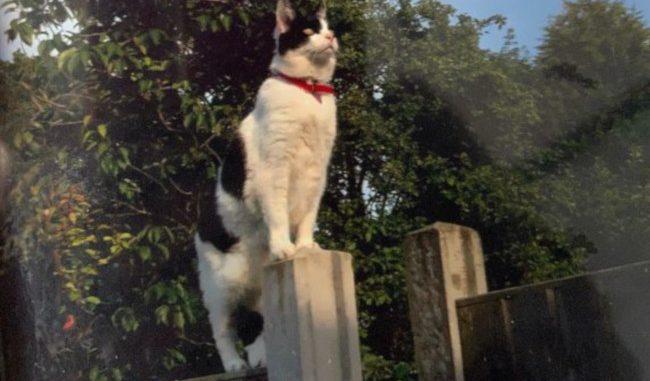 Cat: Izzy Boo Moggy