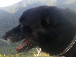 Pet dog: Bea Bea - Terrier Mix