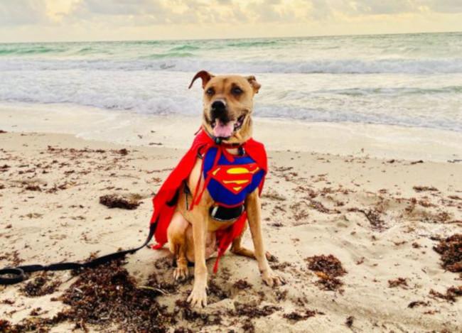 Dog: Barkley (Sharpei – Boxer Mix) – Hollywood, FL