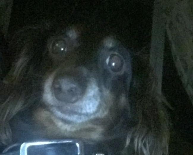 Pet dog – Libby